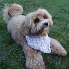 PDF Knitting PATTERN - Bubble Dog Cowl /Neckwarmer/Chunky Scarf/ Bandana/Cat Pet Bib Clothing/Canine Diy Accessories