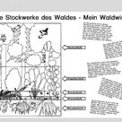 Lebensraum Wald Stockwerke Archive   Blog   Bildung leben mit innovativem Unterrichtsmaterial
