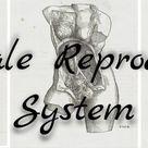Anatomy Monday Female Reproductive System   JobuFIT