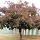 Common Trees Of The Year South Africa | Tree Tags