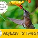 Homeostasis and Adaptations