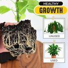 Rapid Rooting Powder - 2 Pcs