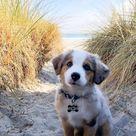 Der süßeste Welpe des Tages - 24 Bilder - #Bilder #der #des #süßeste #Tages ...,  #babypictur...
