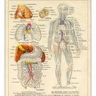 A1 Poster. Human Body Nervous and Blood flow System Diagram