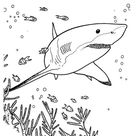 Top 25 of Fascinating Shark Species Coloring Pages - Coloring Pages