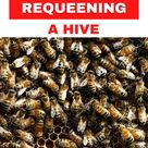 The Steps to Take When Requeening a Hive