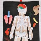 FULL SET (skeleton and organs),Anatomy board,Medical Play Set,Human body,Large Anatomy Play Set,Human anatomy Montessori science play set