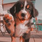 dog sandbox diy