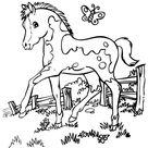 Ausmalbilder Pferde, bild Kleine Fohlen mit einem Schmetterling