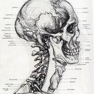 Fuck Yeah Medical Diagrams