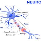 11 Facts About the Nervous System Every Nursing Student Should Know