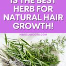 Why Rosemary is the BEST Herb for Natural Hair Growth!