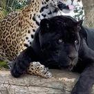 Keira loves her partner Neron❤️