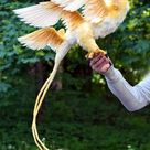 Thunderbird   Etsy
