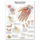 Anatomy Hand Wrist Pictures Anatomical Charts Posters Anatomy Arm Leg Canvas Print Wall Pictures Medical Education Office Home - 60x80cm no frame