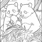 Giant Panda | Worksheet | Education.com