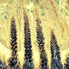 Secretions in gastric pits of Babirusa stomach | 1994 Photomicrography Competition