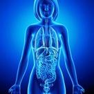 All organs of female body in blue x-ray loop