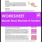 Worksheet - What is Muscle Tissue Structure and Function (HS-LS1)