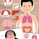 Human Body Printables - Homeschooling | 123 Kids Fun Apps