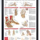Anatomy and Injuries of the Foot and Ankle Chart 20x26