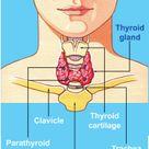 Your thyroid gland