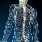 Human nervous system, artwork - Stock Image - F004/1392