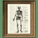 Human SKELETON DIAGRAM awesome upcycled vintage dictionary   Etsy