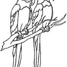 Parrot Couple Coloring Page - Download & Print Online Coloring Pages for Free