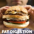 Enzymes for Fat Digestion