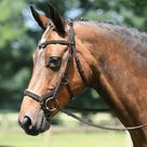 Busse Feeling Anatomical Bridle - Pony / Brown and Cream