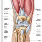 Anatomy of human knee joint. Metal Print by StocktrekImages