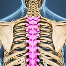 Thoracic Spine Anatomy and Upper Back Pain