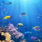 Underwater life wallpaper