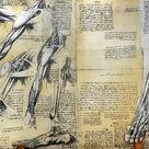 Box Canvas Print. Muscle structure Leonardo da Vincis drawing.