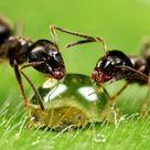 Ameisen bekämpfen im Haus und im Garten - Hausmittel gegen Ameisen