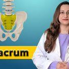 Sacrum Column Vertebrae Bone Anatomy Lecture for First Year Medical Students