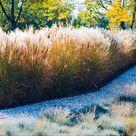 Pflanzen als Sichtschutz Unsere Top 15 für Garten & Balkon