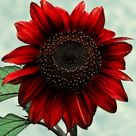 .:.Red Sunflower.:. by Ailedda on DeviantArt