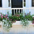 1000 ideas about balkonpflanzen sonnig on pinterest. Black Bedroom Furniture Sets. Home Design Ideas
