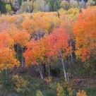 Colorado in November??? - Colorado Forum