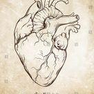 Hand Drawn Line Art Anatomically Correct Stock Vector Royalty Free 403956232