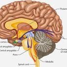 Las neuronas que disparan juntas, se conectan. Consejos sobre aplicación de la neuroeducación al aula