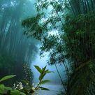 Việt Nam Travel