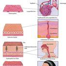 Zellen - Grundlagen - MSD Manual Ausgabe für Patienten