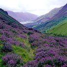 Scottish Highlands — Ellen Barone