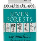 Lysimachia 3 Seven Forests   Free Shipping