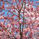 10 best trees for small gardens Beautiful small trees