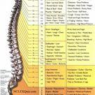 Spinal Nerve Function Cheat Sheet - StudyPK
