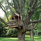 Treehouse Kids